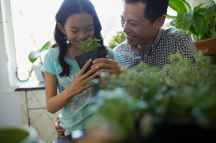Father and daughter with plantsの写真素材 [FYI02307496]