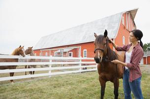 Woman grooming horse on farmの写真素材 [FYI02307820]
