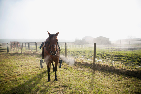 Steamy breath from horseの写真素材 [FYI02308397]