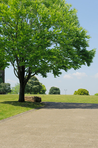 石畳の小道と新緑の樹木の写真素材 [FYI02310662]