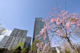 桜と東京ミッドタウンタワーの写真素材 [FYI02310736]
