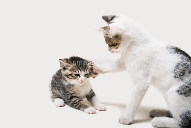猫パンチの写真素材 [FYI02310738]