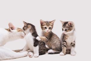 順番待ちの子猫の写真素材 [FYI02310774]