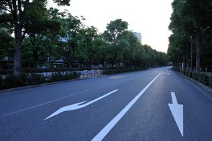 早朝のくすのき通りの写真素材 [FYI02310783]