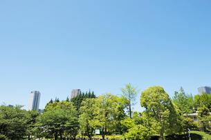 新緑の樹木と都心の高層ビルの写真素材 [FYI02310796]