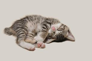 昼寝の子猫の写真素材 [FYI02310865]