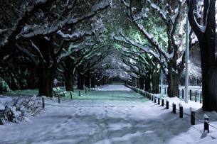 深夜の雪の神宮外苑の写真素材 [FYI02310905]