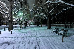 深夜の雪の神宮外苑の写真素材 [FYI02310954]