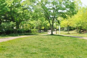 港北ニュータウンの森と遊歩道の写真素材 [FYI02310970]