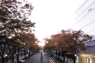 表参道のケヤキ並木の黄葉の写真素材 [FYI02311032]