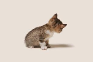 あっちを見る子猫の写真素材 [FYI02311039]