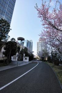 サカス坂と桜並木の写真素材 [FYI02311067]