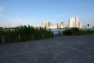 晴海運河岸より見る豊洲の高層ビル群の写真素材 [FYI02311100]