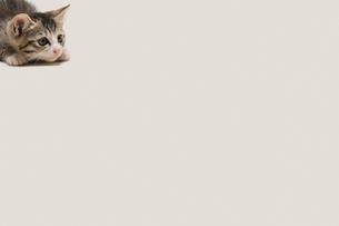 獲物を狙う子猫の写真素材 [FYI02311147]