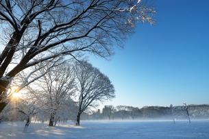 朝日と積雪の代々木公園の写真素材 [FYI02311155]