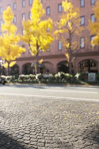 山下公園通りの石畳と黄葉のイチョウ並木の写真素材 [FYI02311258]