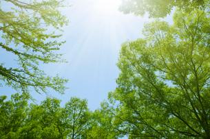 新緑の木々と陽光の写真素材 [FYI02311307]