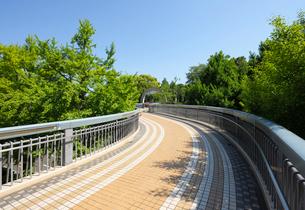新緑のポーリン橋の写真素材 [FYI02311323]