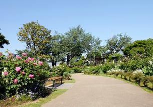 港の見える丘公園のローズガーデンの写真素材 [FYI02311335]