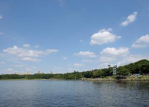 京浜運河と大井ふ頭中央海浜公園なぎさの森の写真素材 [FYI02311357]