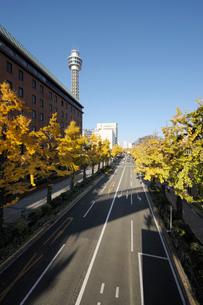 山下公園通りと黄葉のイチョウ並木の写真素材 [FYI02311369]