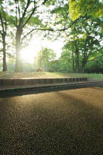 夕日と新緑の代々木公園の写真素材 [FYI02311411]