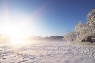朝日に輝く積雪の代々木公園の写真素材 [FYI02311427]