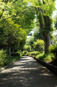 新緑の樹木と石畳の遊歩道の写真素材 [FYI02311428]