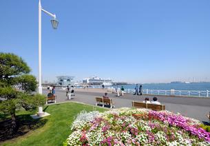 山下公園の花と豪華客船の写真素材 [FYI02311429]