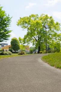 新緑とローカルな小道の写真素材 [FYI02311433]