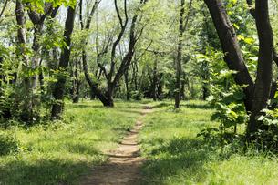 新緑の雑木林の小道の写真素材 [FYI02311436]
