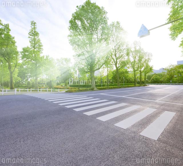 横断歩道と新緑の若葉東公園の写真素材 [FYI02311446]