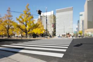 横断歩道と高層ビルの写真素材 [FYI02311461]
