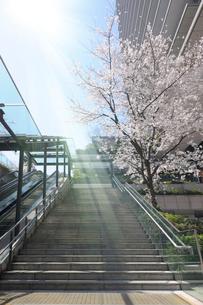 春の陽光と石畳の階段の写真素材 [FYI02311492]