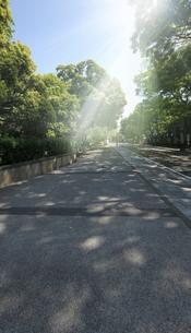 山手本通りの歩道と新緑の木々の写真素材 [FYI02311589]
