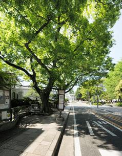 新緑の大木と山手本通りの写真素材 [FYI02311594]
