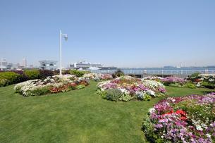 山下公園の花と豪華客船の写真素材 [FYI02311602]