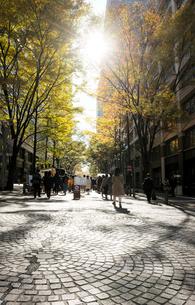 紅葉の丸の内ストリートマーケットの写真素材 [FYI02311606]