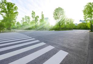 横断歩道と新緑の若葉東公園の写真素材 [FYI02311763]