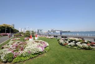 山下公園の花と豪華客船の写真素材 [FYI02311764]