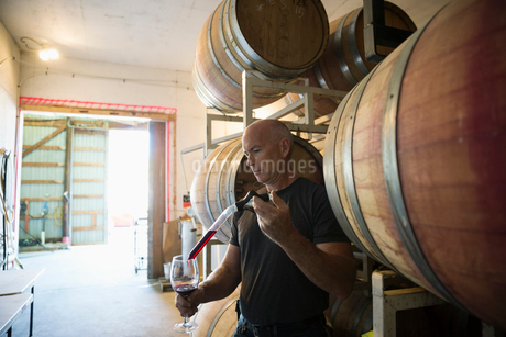 Vintner checking red wine in winery barrel roomの写真素材 [FYI02311985]