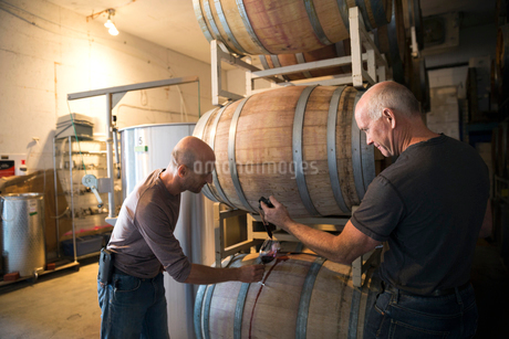 Vintners checking and tasting red wine in winery barrel roomの写真素材 [FYI02312179]