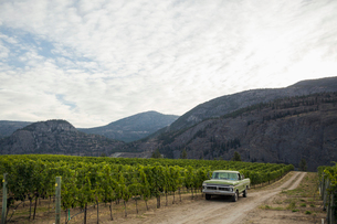 Truck parked in vineyard below mountainsの写真素材 [FYI02313068]
