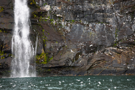 Waterfall against mossy rocksの写真素材 [FYI02315493]
