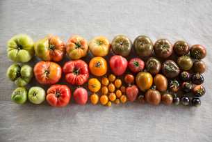 Overhead still life multicolor variety heirloom tomatoes in rowsの写真素材 [FYI02315823]