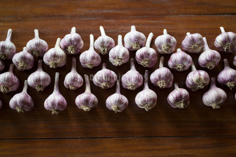 Overhead view of purple garlic in a rowの写真素材 [FYI02315968]