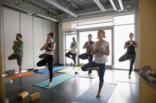 Yoga class practicing tree pose in studioの写真素材 [FYI02317406]