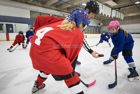 Referee dropping puck for girl ice hockey players at face off on ice hockey rinkの写真素材 [FYI02317413]