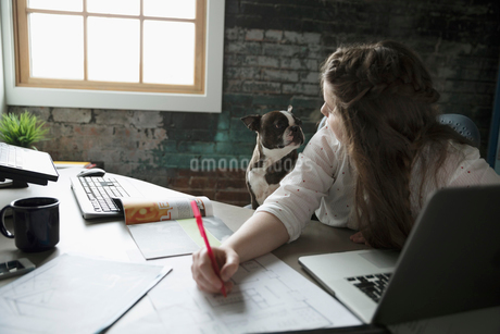 Female architect working, looking over shoulder at dog in officeの写真素材 [FYI02318554]