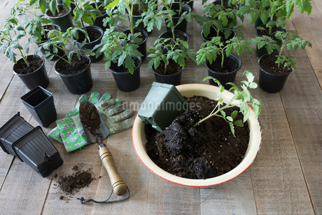 Still life of seedlings and soil in flowerpotの写真素材 [FYI02318556]